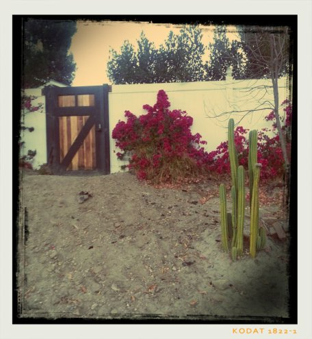 cacti walk